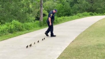 police-officers-help-ducklings-find-mom