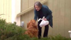 dog-delivers-groceries