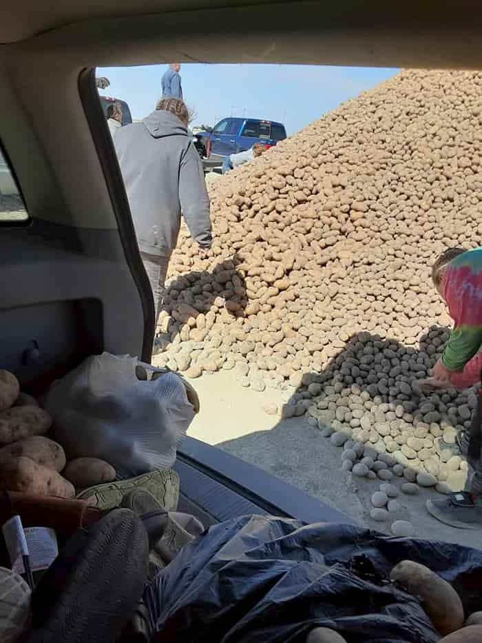 idaho-farmer-giving-away-potatoes-2