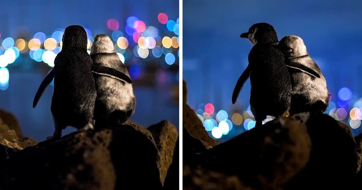 penguins-comfort-each-other