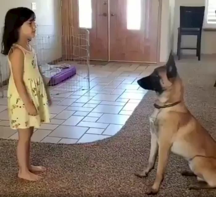 dog-plays-hide-and-seek-with-little-girl-1