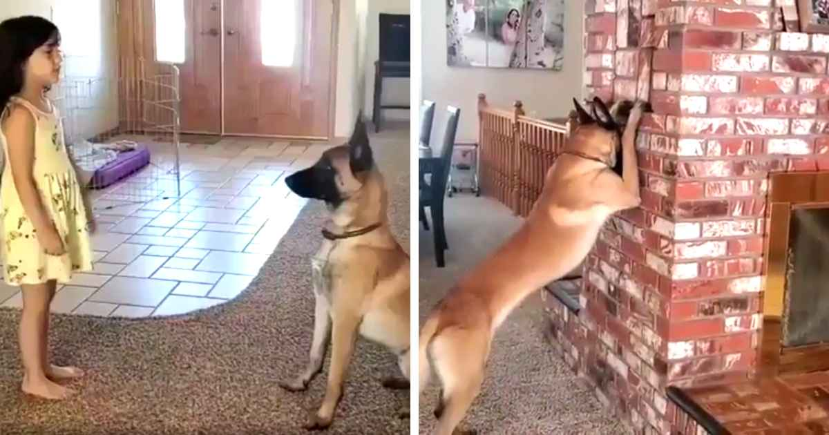 dog-plays-hide-and-seek-with-little-girl
