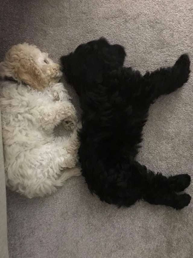 dog-siblings-hug-each-other-4