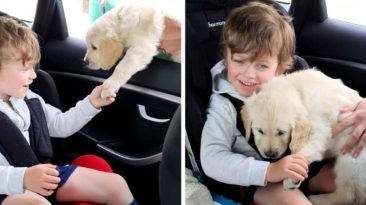 nonverbal-boy-with-autism-gets-puppy