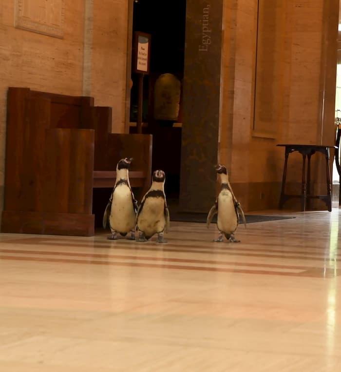 penguins-visit-museum-3