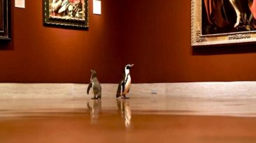 penguins-visit-museum