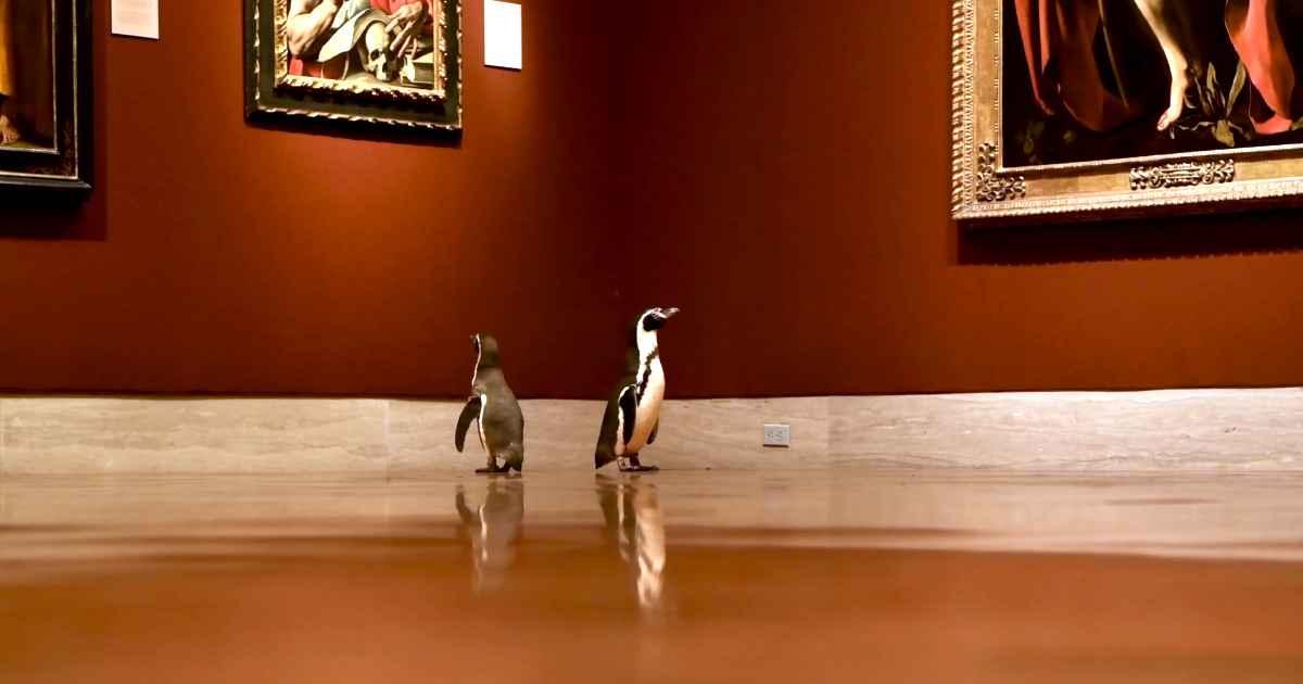 penguins-visit-museum