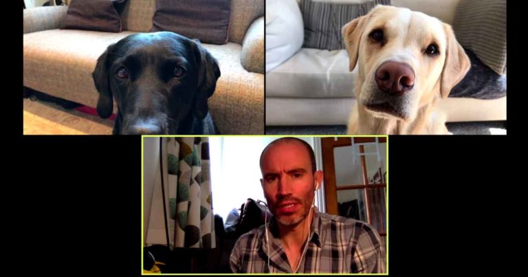 zoom-company-meeting-with-dogs