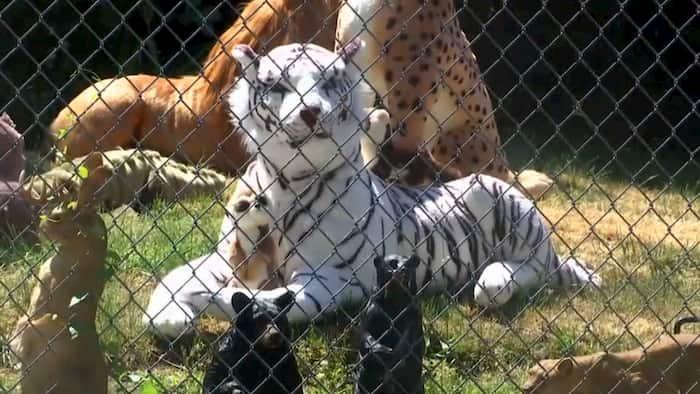 front-yard-zoo-2