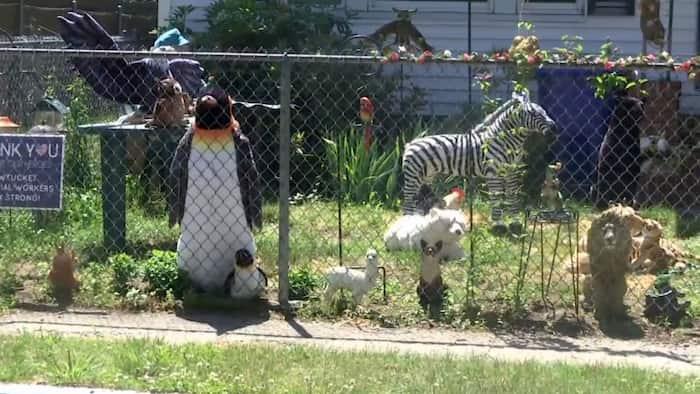 front-yard-zoo-4