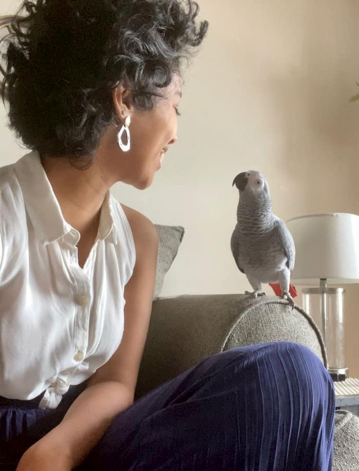 missing-african-gray-parrot-2