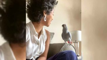 missing-african-gray-parrot