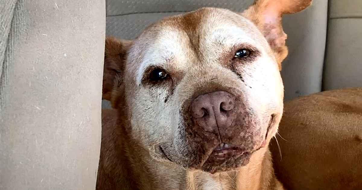 smiling-pitbull-poe