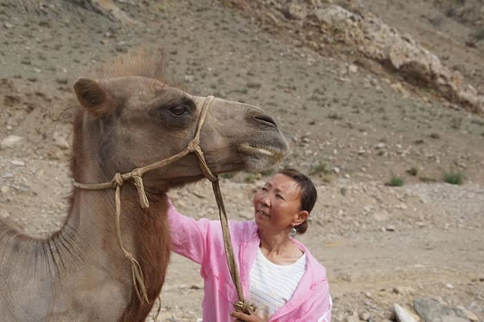 camel-returns-to-owner-3