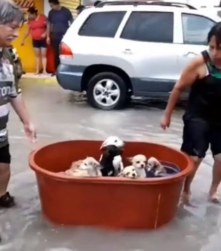 couple-save-puppies-hanna-hurricane-2