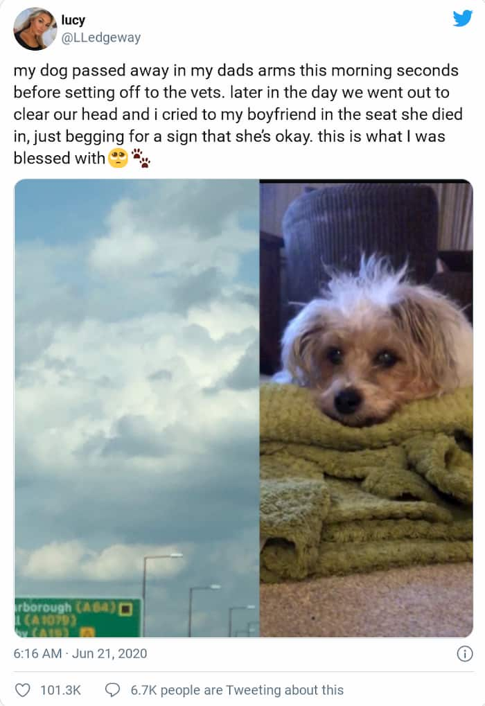 dog-face-in-cloud