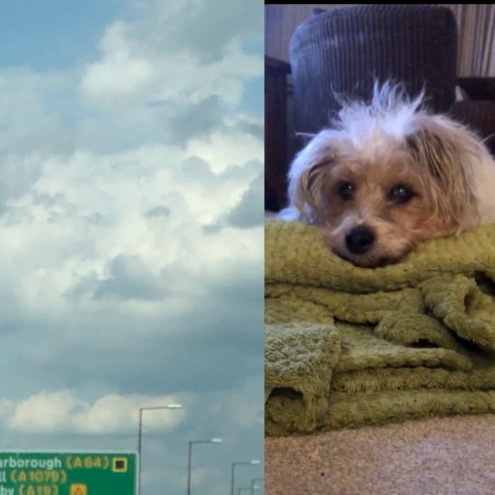 dog-face-in-clouds-3