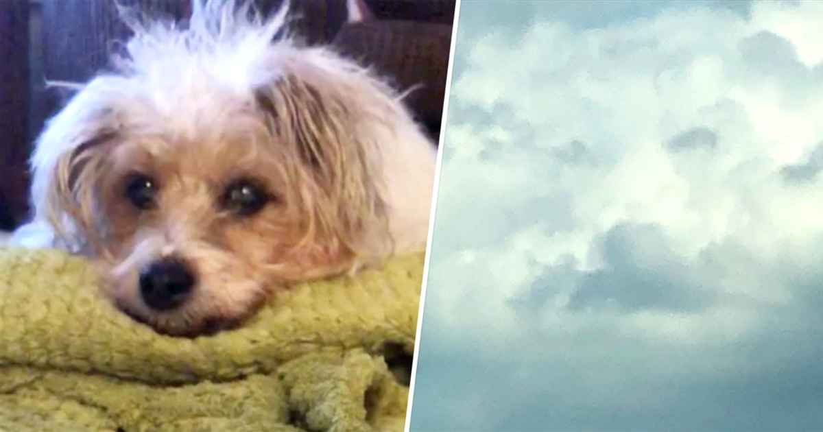 dog-face-in-clouds