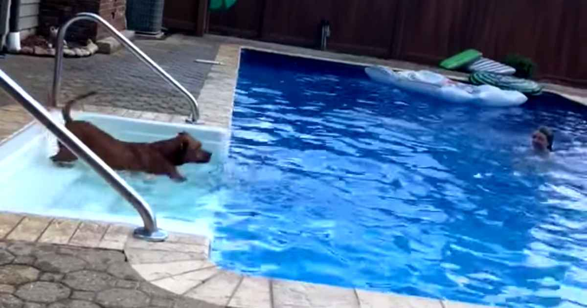 dog-saves-little-girl-from-pool