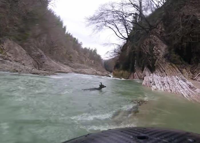 kayaker-saves-deer-2