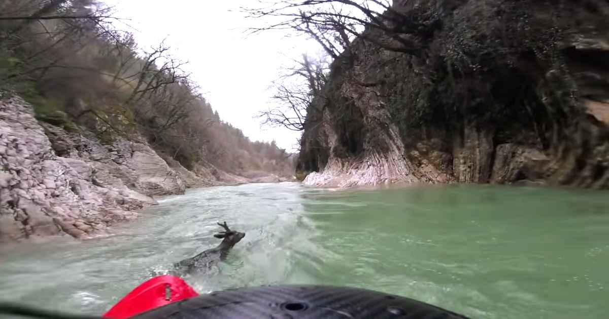 kayaker-saves-deer