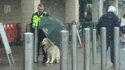 security-guard-protects-dog-from-rain
