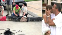 dad saves daughter from alligator