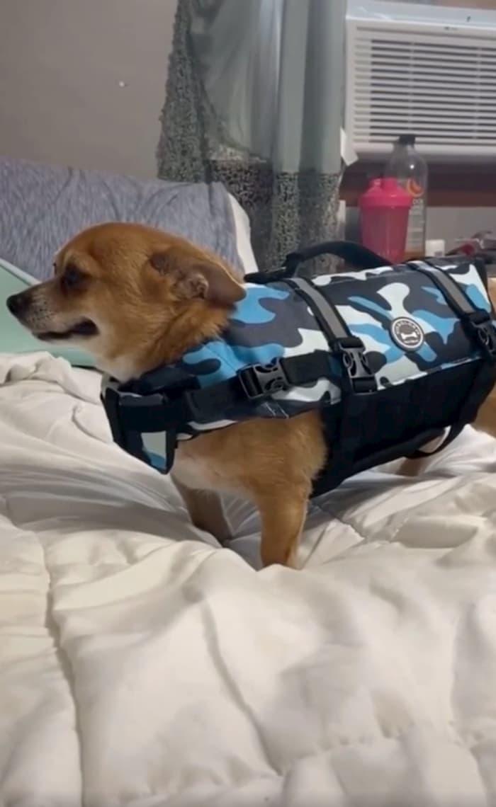 dog-in-life-jacket-tiktok-video-2
