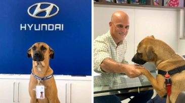 hyundai-gives-job-to-dog