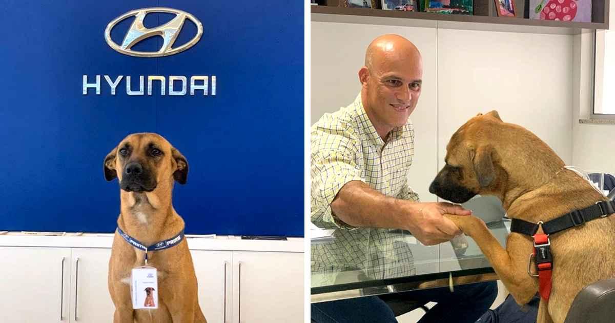 hyundai-gives-job-to-dog