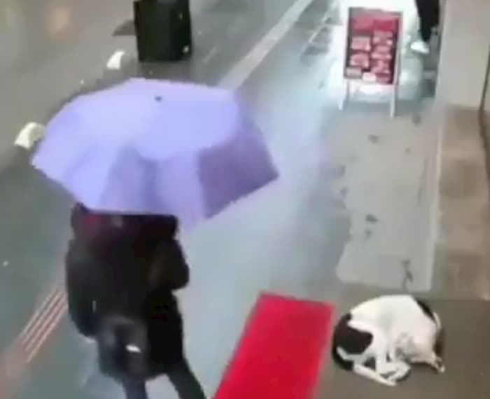 woman-gives-dog-her-scarf-2