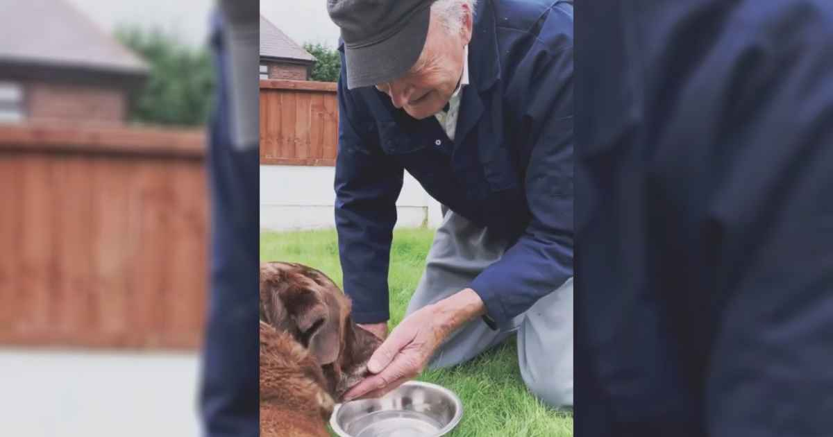 90-year-old-says-goodbye-to-dying-dog
