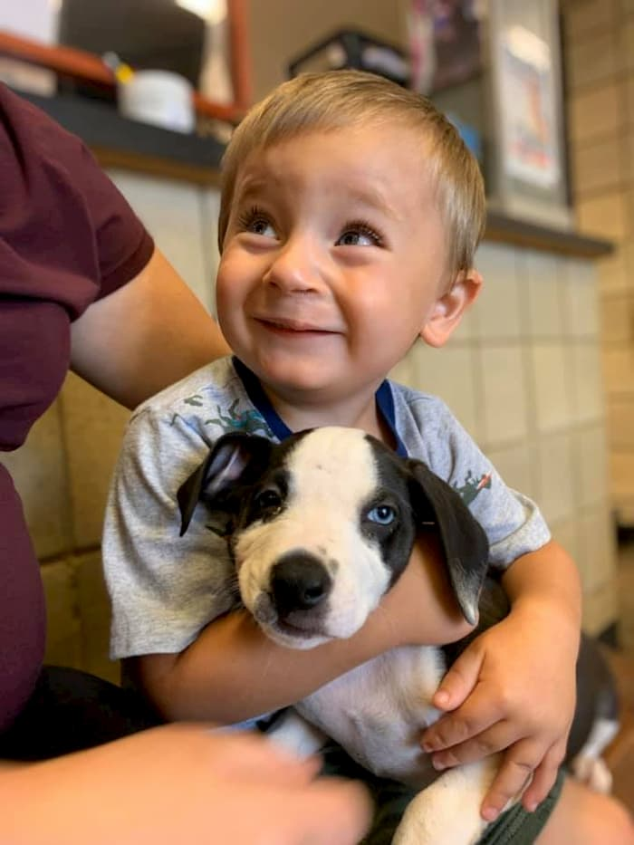 boy-with-cleft-lip-gets-puppy-with-same-condition-bentley-2