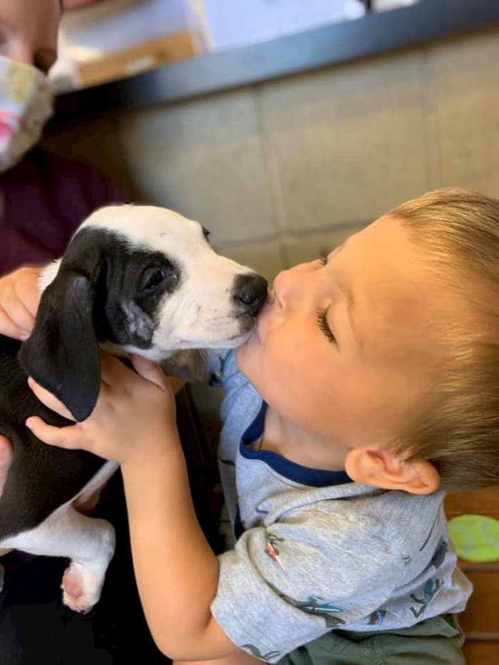 boy-with-cleft-lip-gets-puppy-with-same-condition-bentley-3