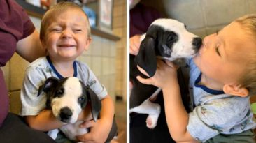 boy-with-cleft-lip-gets-puppy-with-same-condition-bentley