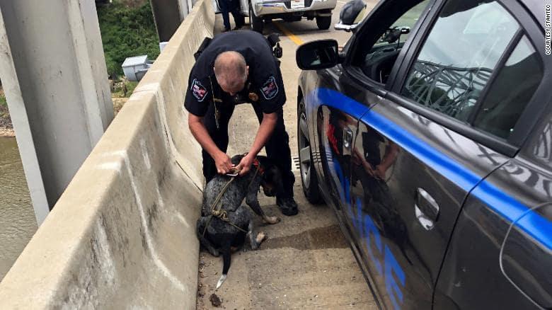 bridge-inspector-rescues-dog-2