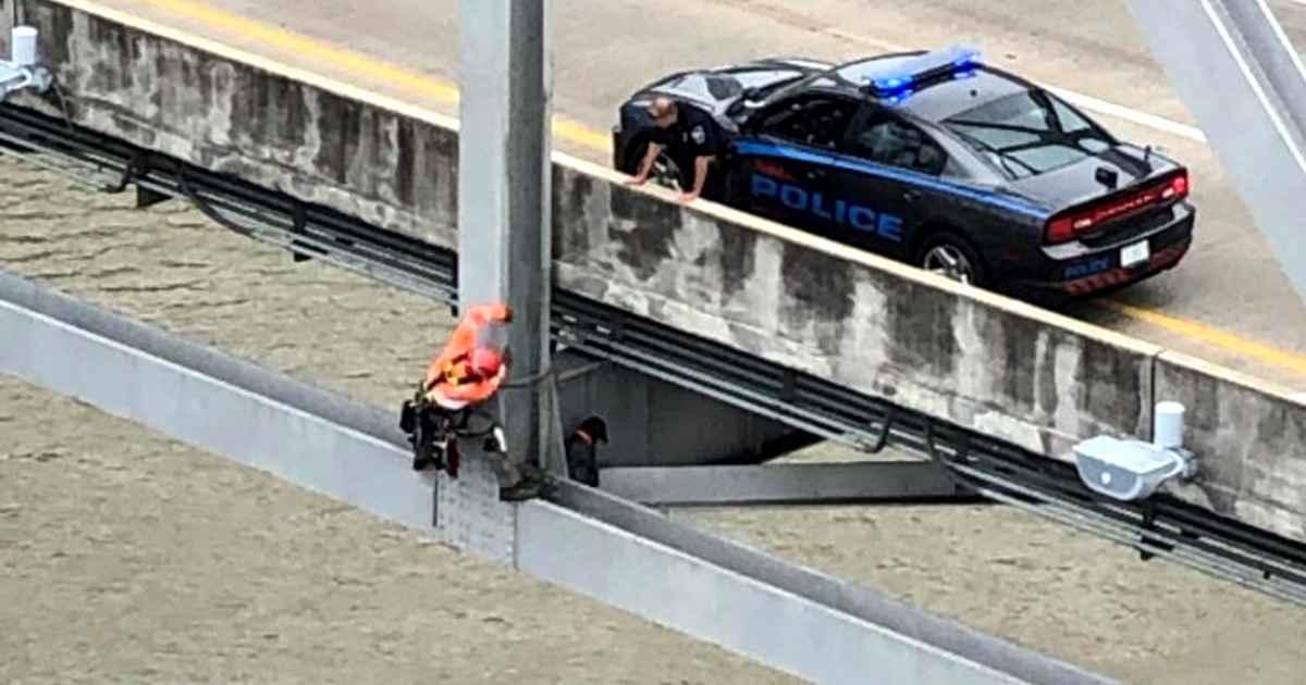 bridge-inspector-rescues-dog