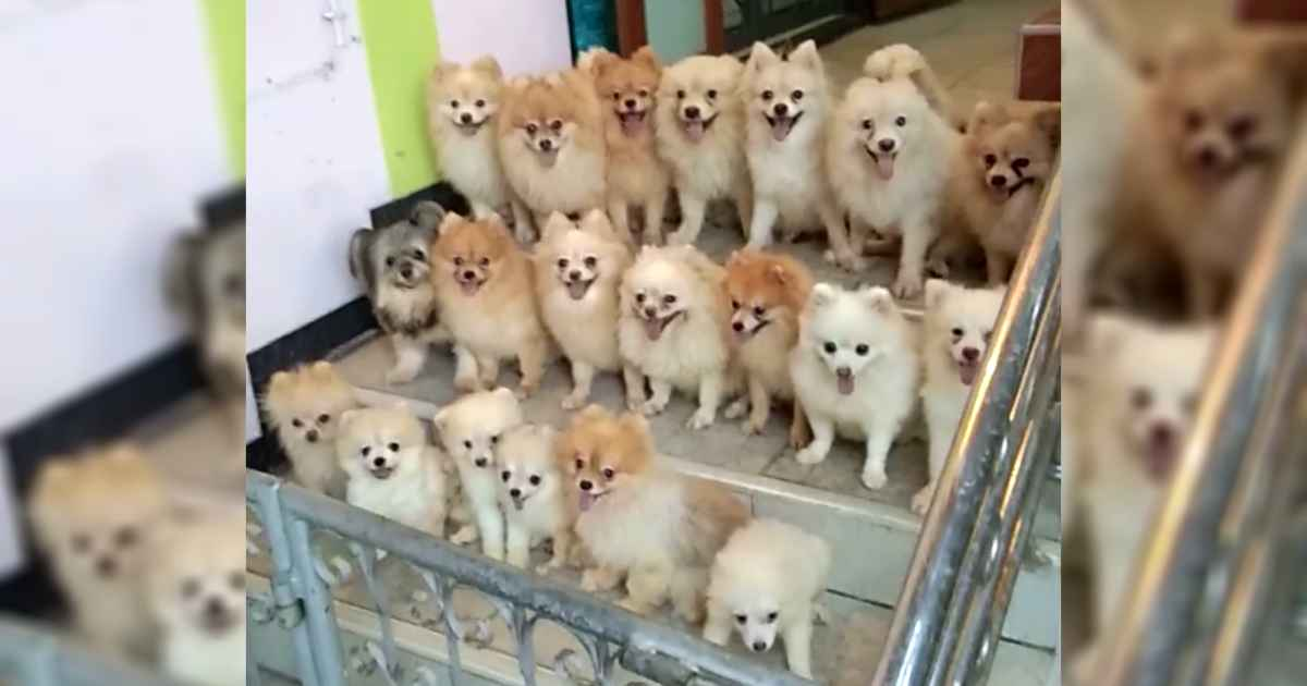 pack-of-puppies