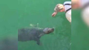 blind-seal-friendship