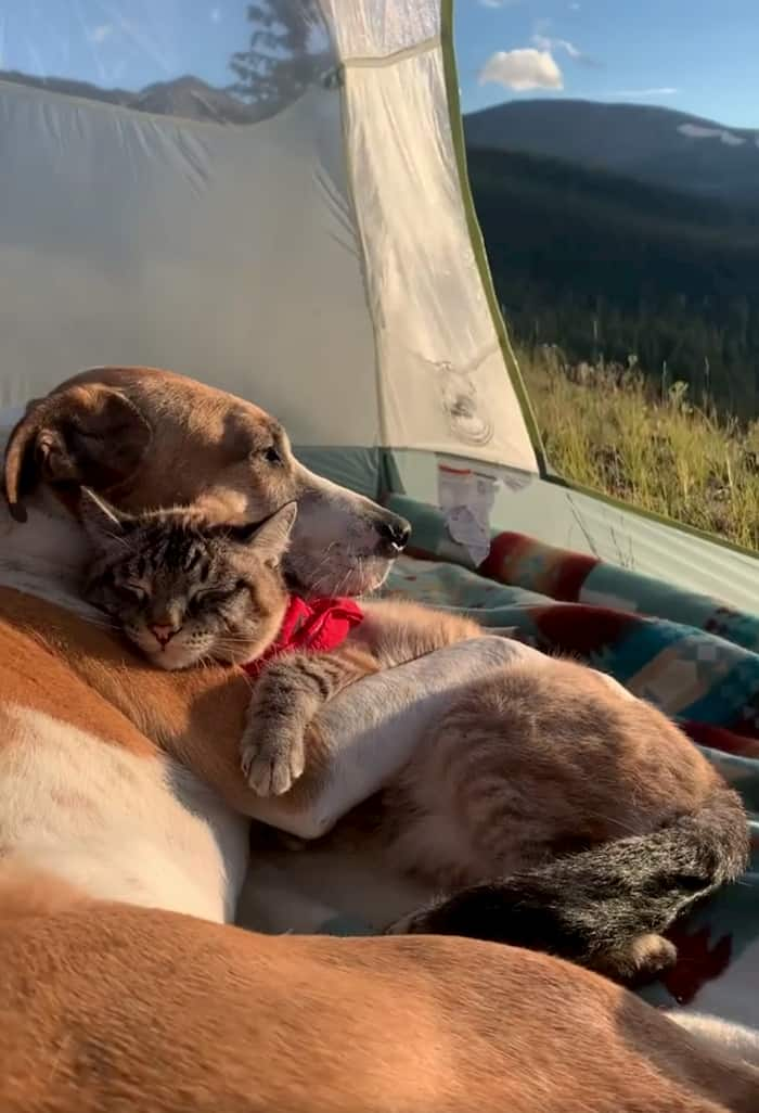 dog-and-cat-friendship