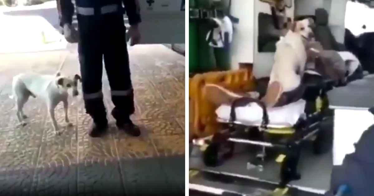 dog-won't-leave-owner