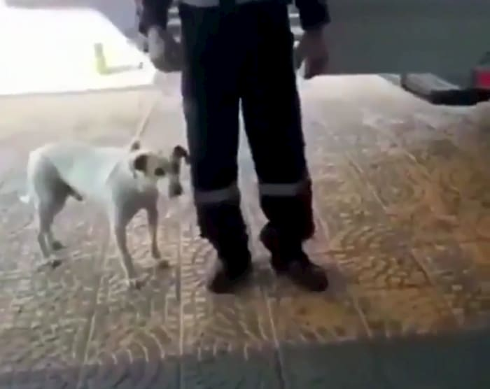 dog-won't-leave-owners-side