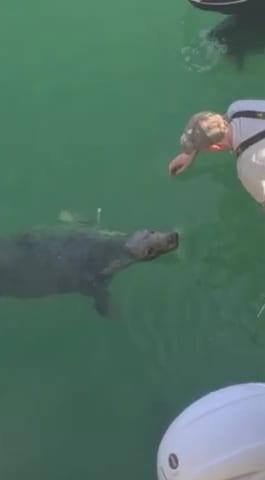 fisherman-seal-friendship