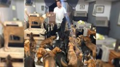 ricardo-pimentel-dogs