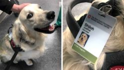 hospital-hires-dog-as-justice-volunteer