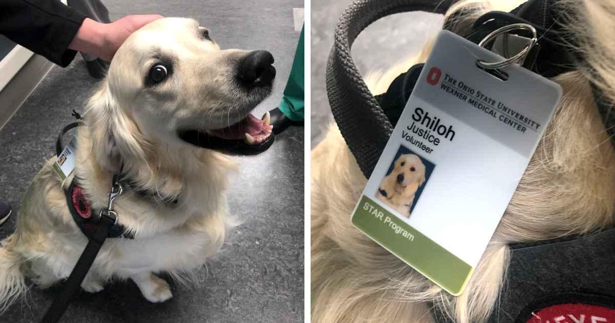 hospital-hires-dog-as-justice-volunteer