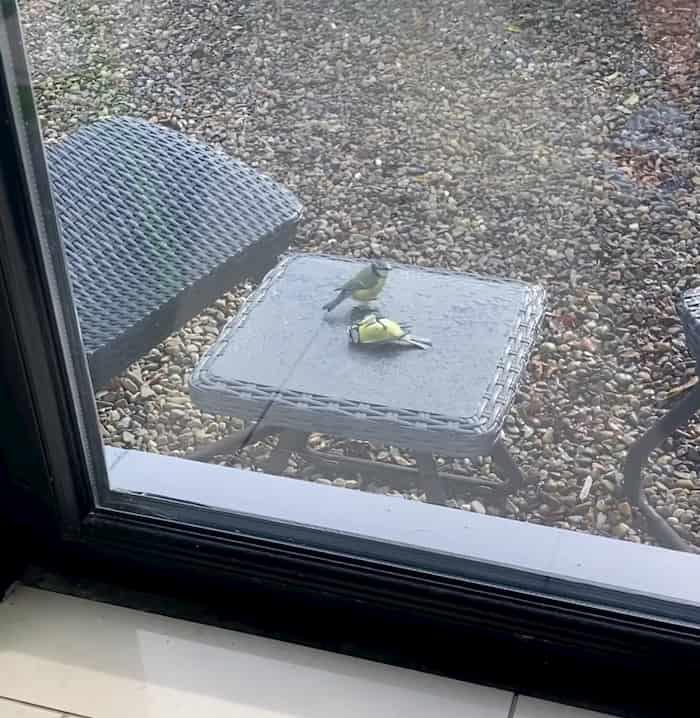 bird-reviving-another-bird