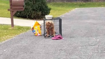 dog-abandoned-with-bag-of-food