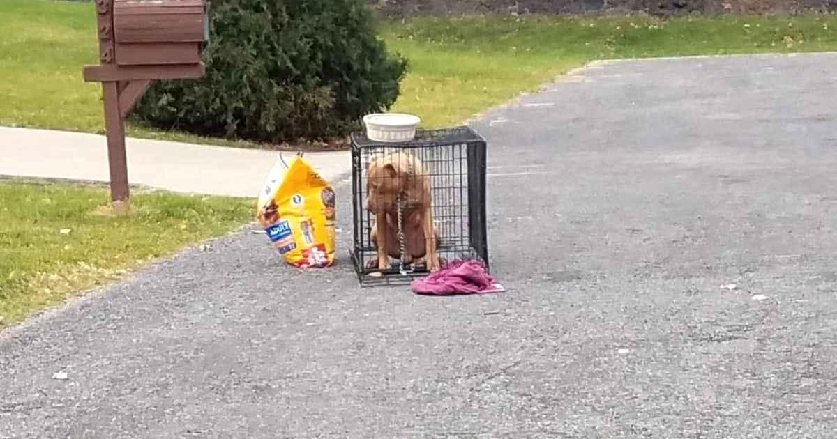 dog-abandoned-with-bag-of-food