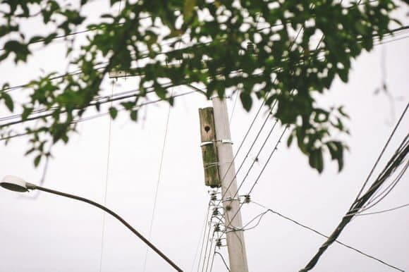 electrical-worker-saves-toucans-4
